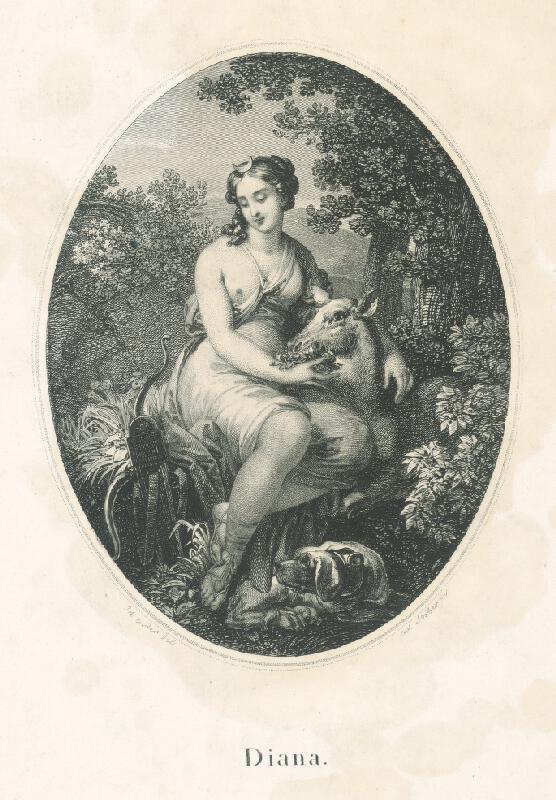 Franz Stöber, Johann Nepomuk Ender - Diana
