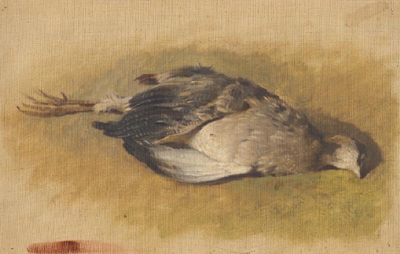 Friedrich Carl von Scheidlin - Náčrt mŕtvej jarabice