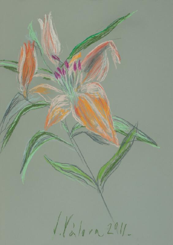 Jitka Válová - Oranžová lilie